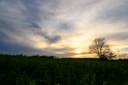 Sonnenuntergang über den Weiden Kleinnaundorf